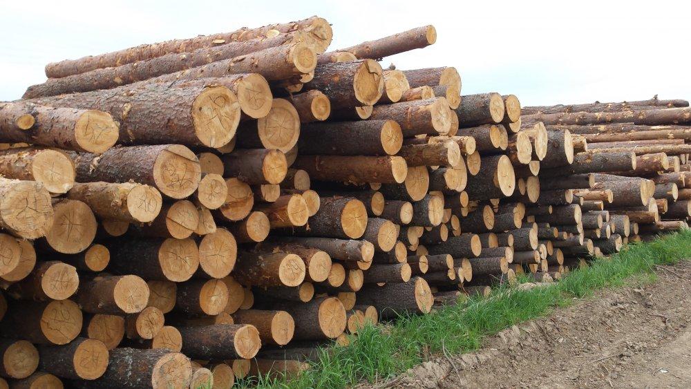 Как получить лес от государства бесплатно любому?